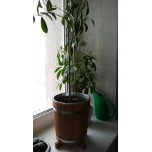 Кадка для цветов дубовая BonRomProm 12 л. с вставкой